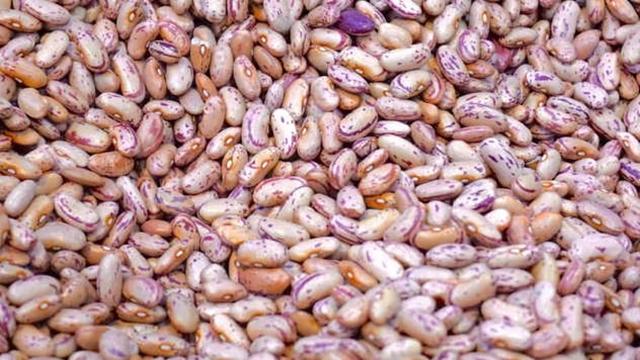 Sve što treba znati o gajenju pasulja