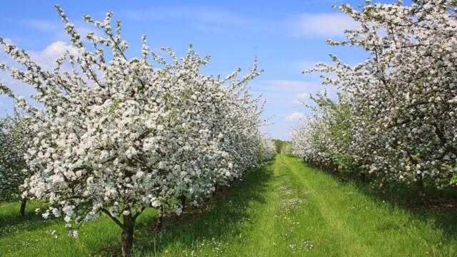 Zalivanje voćnjaka: Kada biljkama treba najviše vode