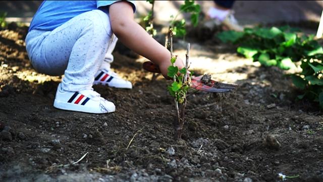 """Prvi """"community garden"""" u okviru predškolske ustanove u Novom Sadu"""