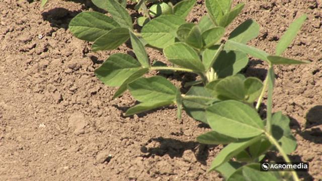 Međuredna kultivacija i navodnjavanje ključni za visok prinos soje