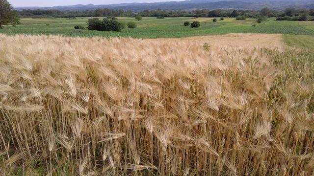 Integrisana poljoprivreda put ka organskoj proizvodnji!