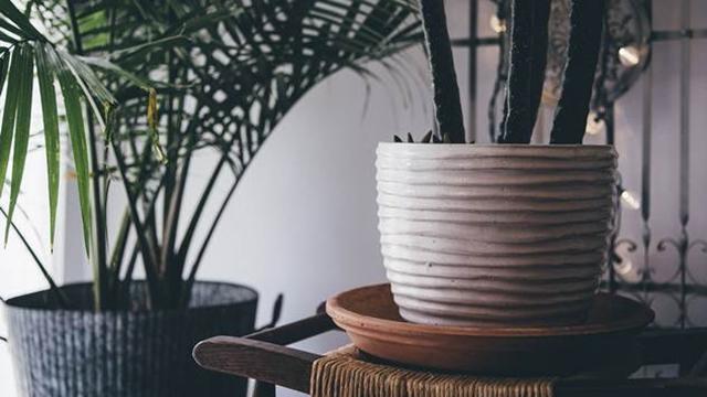 Drenaža veoma bitna za uspešno gajenje sobnih biljaka
