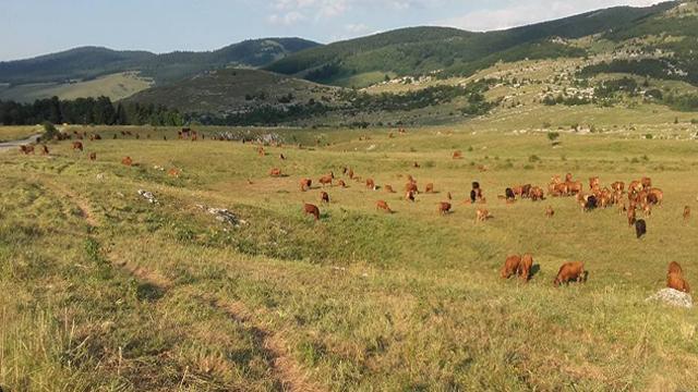 Šta stočari mogu da očekuju u okviru mere Dobrobit životinja