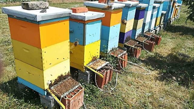 Istine i zablude u vezi sa pčelinjim otrovom