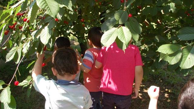 """Projekat """"Mali farmer"""" upoznaje decu sa poljoprivrednom proizvodnjom"""
