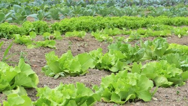 Saveti za proizvodnju zdravog semena