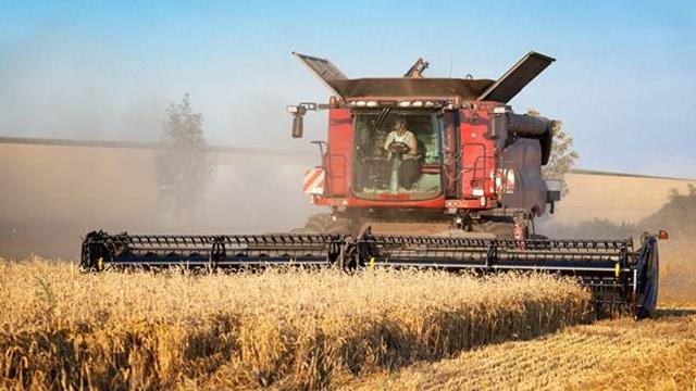 Česte padavine protekle nedelje mogu uticati na kvantitet i kvalitet pšenice