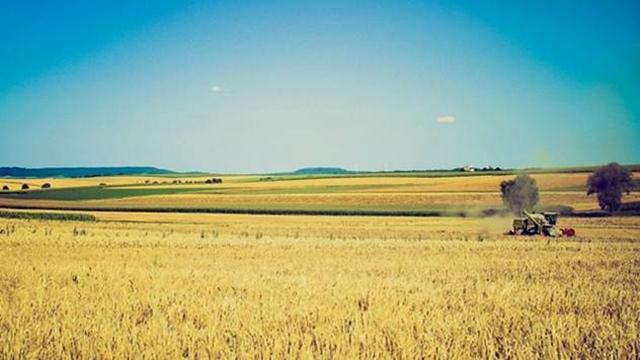Zbog kiše proklijalo seme pšenice