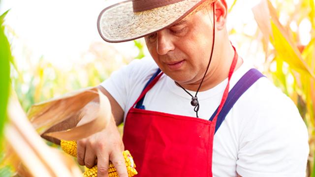 Aplikacijom do brže, preciznije i pouzdanije procene šteta na usevima i plodovima