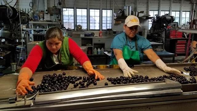 Za 60 dana počinje gradnja fabrike za preradu voća u Arilju