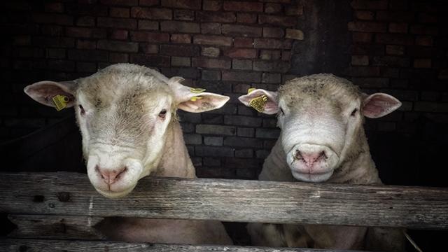 AGROmedia intervju: Šta je najveći problem stočarske proizvodnje u Srbiji?