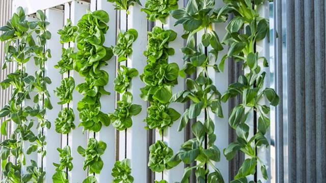 Najveća vertikalna farma biće u Dubaiju