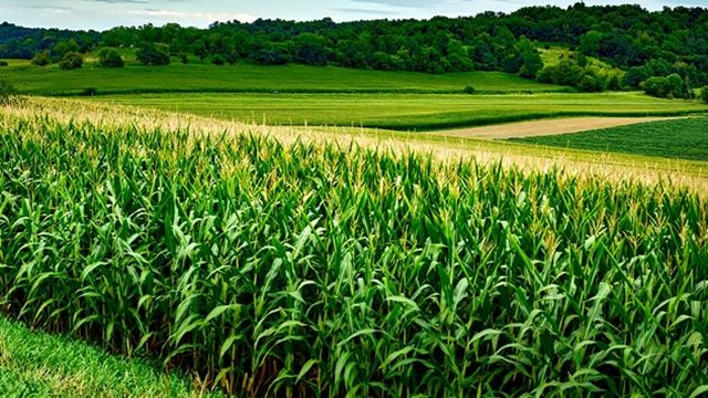 Sparno vreme pogoduje razvoju bolesti na svim poljoprivrednim kulturama