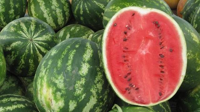 Kako sprečiti bakterioznu mrljavost lubenice