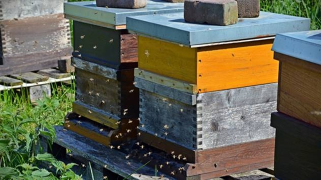 Potpisani ugovori za subvencionisanje pčelarstva