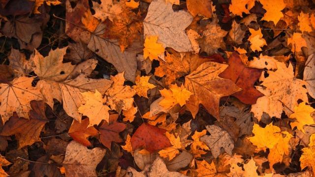 Kako da iskoristite opalo lišće u malčiranju zemljišta?