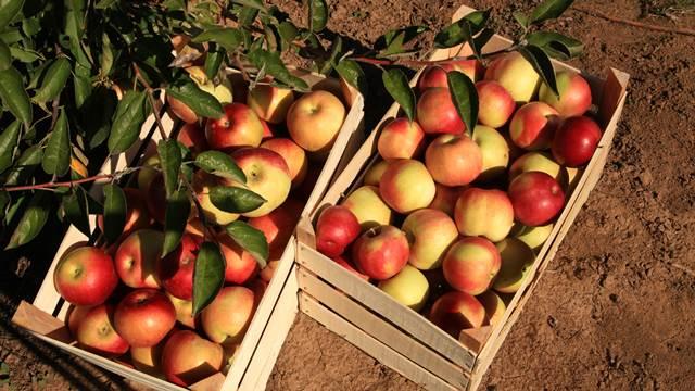 Ubranom voću takođe prete oboljenja