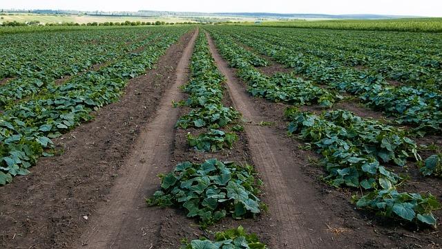 Rani mraz uništava povrće u Srbiji