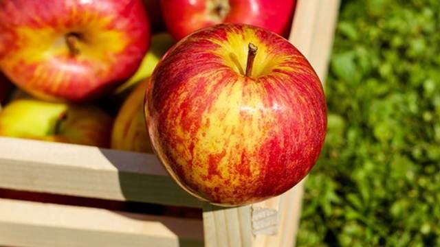 Šta koči berbu jabuka?