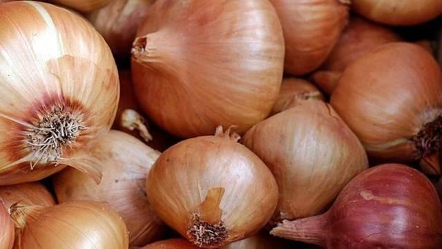 Koje su prednosti sadnje crnog luka u jesen?