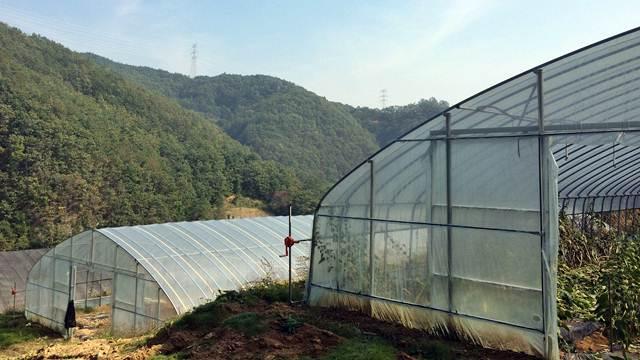 Dezinfekcija zemljišta u plastenicima