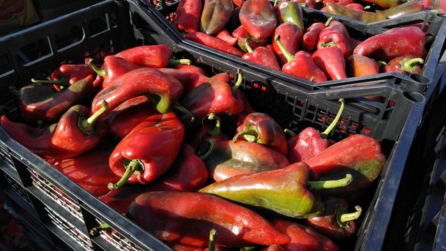 Zašto je paprika skupa?