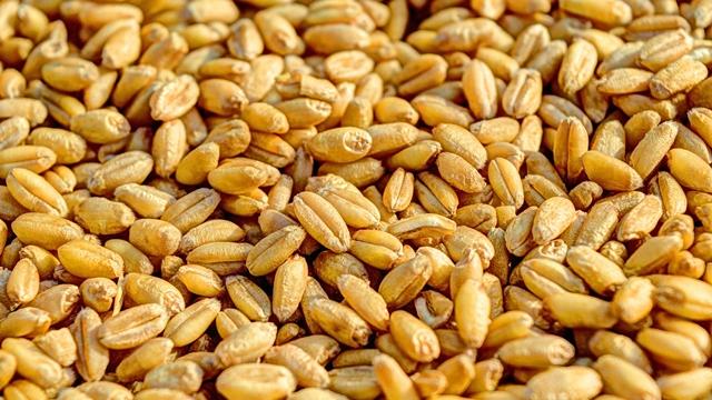 Nova kompanija na tržištu semena u Srbiji od 2019. godine
