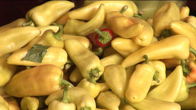 Prednosti uzgoja paprike u zaštićenom prostoru