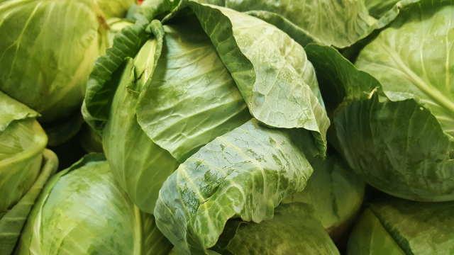 Obrada zemljišta, navodnjavanje i prihrana za sadnju kupusa