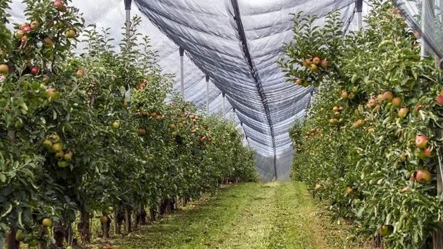 Koji faktori utiču na cenu jabuke i kako dobiti najvišu cenu za svoj proizvod?