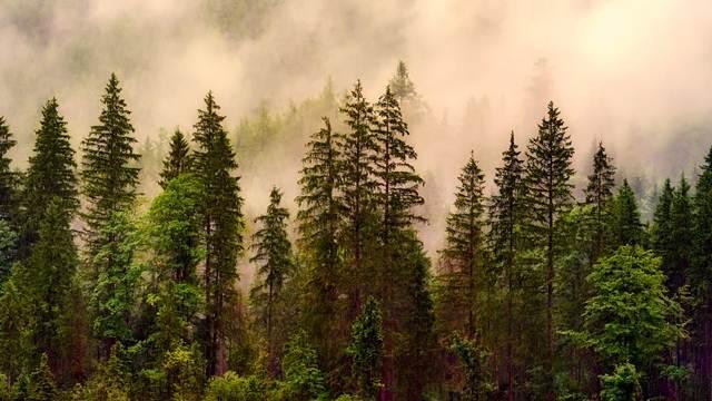 Zaplena ogrevnih drva zbog ilegalne seče