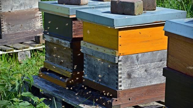 Patent za kontrolisanu prehranu pčela