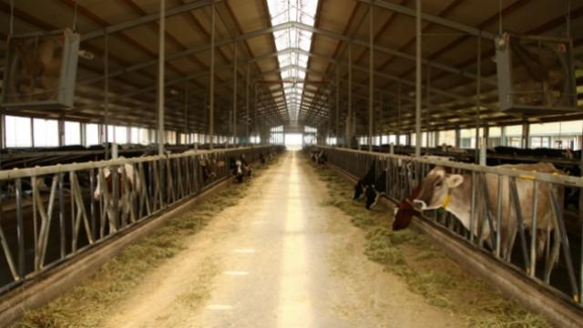 Prostirka od piljevine: Rešenje koje donosi duplu korist farmama mlečnih krava - © Agromedia