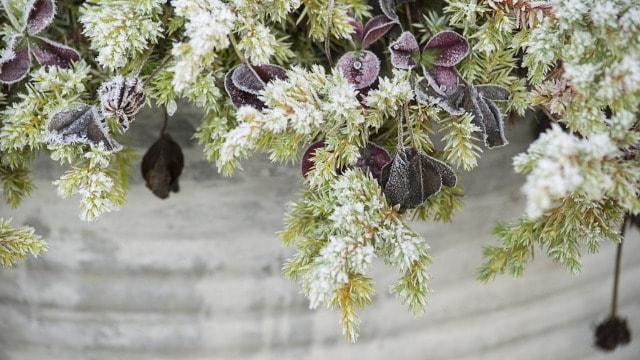 Ako želite cvetno dvorište u proleće, ovo morate uraditi u decembru!