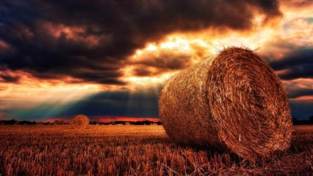 Zakup državnog zemljišta u Kikindi: 9.000 hektara na licitaciji