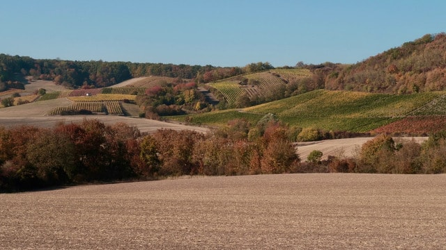 Topla i suva jesen uslovila pojavu i širenje biljnih bolesti i štetočina