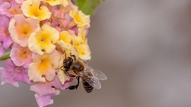 Od Nove godine nema više naplate pašarine za pčele