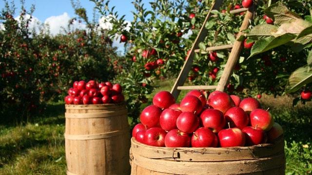 Kuda dalje sa proizvodnjom voća?