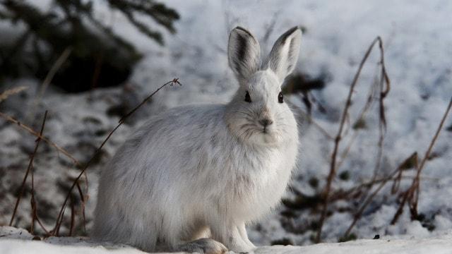 Budite na oprezu: u periodu pod snegom divljač može ugroziti mlade voćnjake