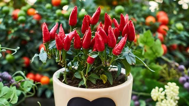 7 biljaka koje možete gajiti u sobi tokom zime