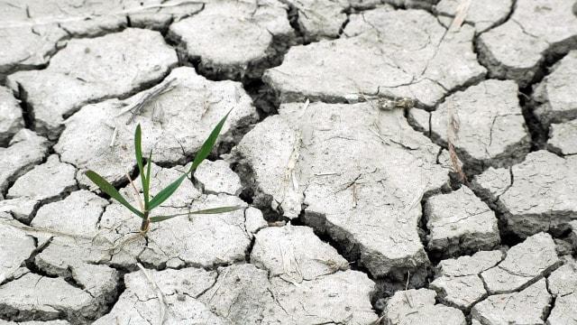 Otvoren novi konkurs za inovacije u oblasti klimatskih promena