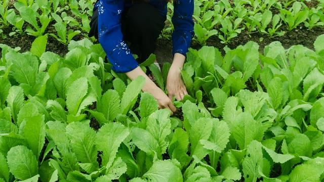 Stručnjaci tvrde: Organska proizvodnja je štetna za životnu sredinu