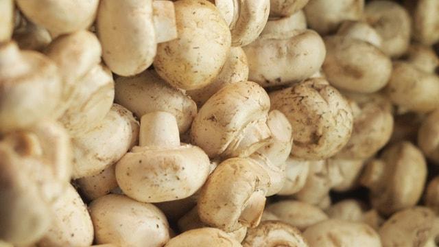 Uzgoj šampinjona: Optimalna temperatura najbitniji faktor