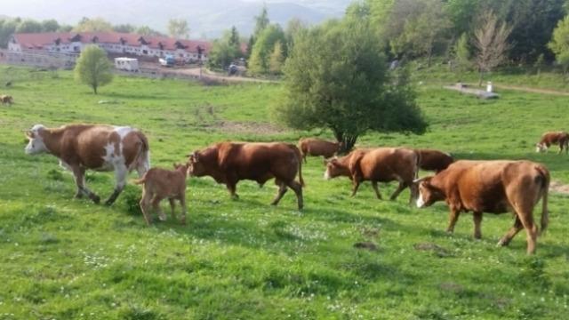 Samo polovini gazdinstava u Srbiji poljoprivreda je jedini izvor prihoda