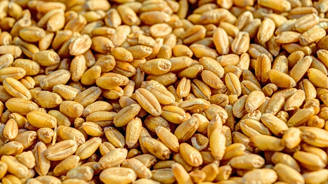 Kada će Srbija moći da izvozi pšenicu u Egipat?