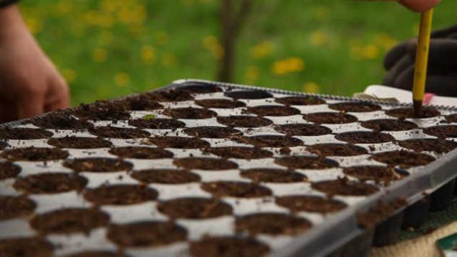 Bez muke: Kako odabrati najbolje kontejnere i saksije za sadnju biljaka