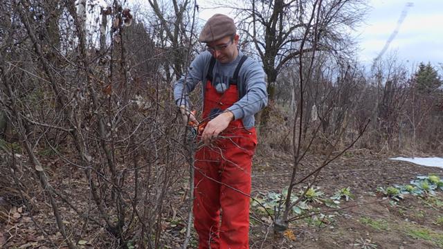 Kada je pravo vreme za presađivanje mladih sadnica voća?