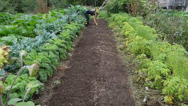 Vodič: Isplanirajte sadnju povrća u bašti korak po korak