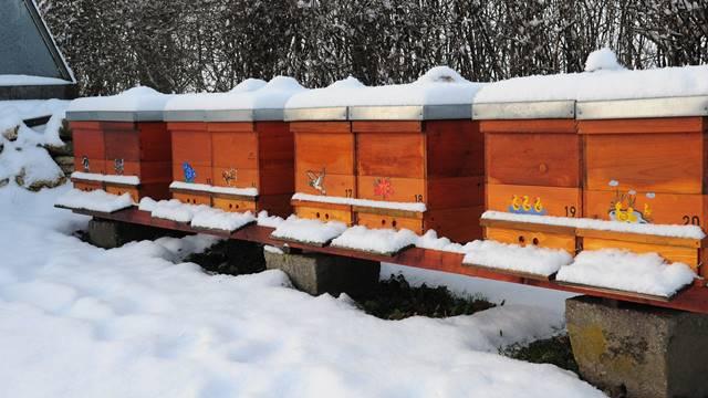 Podsticaji za pčelarstvo u Inđiji - Tri puta više registrovanih pčelinjih društava