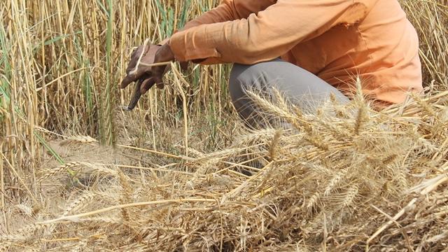 Švajcarska vlada podržava samozapošljavanje u oblasti poljoprivrede